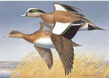 Washington Duck Stamp Print 1989 American Widgeon by Maynard Reece