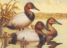 Washington Duck Stamp Print 1987 Canvasbacks by Ray Nichol Medallion Edition