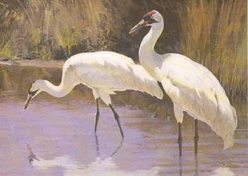 Texas Non Game Stamp Print 1985 Whooping Cranes by Ken Carlson Non Game