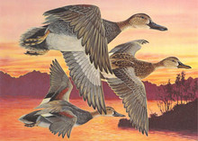 Oklahoma Duck Stamp Print 1991 Gadwalls by R.T. Foster