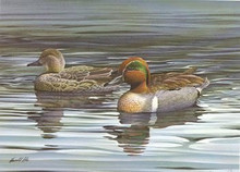Ohio Duck Stamp Print 1984 Green-winged Teal by Harold Roe