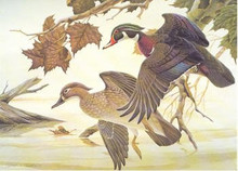Ohio Duck Stamp Print 1982 Wood Ducks by John A Ruthven