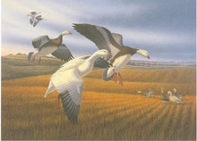 North Dakota Duck Stamp Print 1987 Snow Geese by Ronald J. Louque