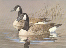 North Carolina Duck Stamp Print 1986 Canada Geese by Tom Hirata Artist Proof