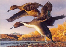 New Mexico Duck Stamp Print 1991 Pintails by Robert Steiner