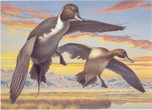 Nevada Duck Stamp Print 1984 Pintails by Robert Steiner