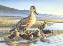 Montana Duck Stamp Print 1988 Mallards by Dave Samuelson With Matching # Stamp