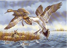 Michigan Duck Stamp Print 1984 Pintails by Larry Cory