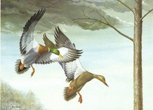 Kentucky Duck Stamp Print 1985 Mallards by Ray Harm Medalion Edition