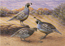 Idaho Upland Game Stamp Print 1991 Valley Quail by William A. Moore Medalion Edition