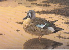 Idaho Duck Stamp Print 1989 Blue-winged Teal by Daniel Smith