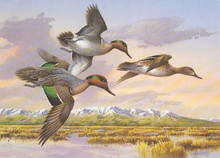 Idaho Duck Stamp Print 1988 Green-winged Teal by Jim Killen Medallion Edition