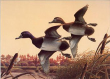 Georgia Duck Stamp Print 1988 Ring-necked Ducks by Paul Bridgford