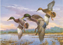Georgia Duck Stamp Print 1986 Mallards by Jim Killen