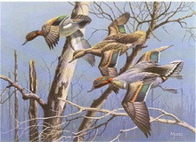 Arkansas Duck Stamp Print 1983 Green-winged Teal by David A. Maass