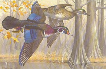 Arkansas Duck Stamp Print 1982 Wood Ducks by Maynard Reece
