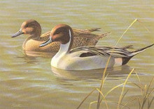 Arizona Duck Stamp Print 1987 Pintails by Daniel Smith Medallion Edition