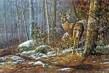 Chequamegon Buck by Scott Zoellick