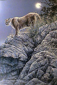 Full Moon Cougar by Paco Young