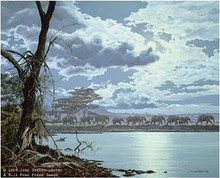 Night Moves - African Elephants by John Seerey-Lester 24.