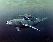Dolphin and Calf - Signed - not numbered by Stephen Regas