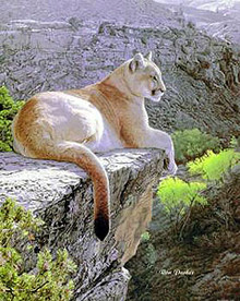 Cougar Country - Giclee Edition by Ron Parker