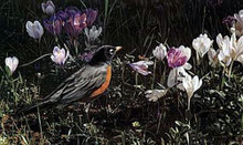Signs of Spring by Terry Isaac