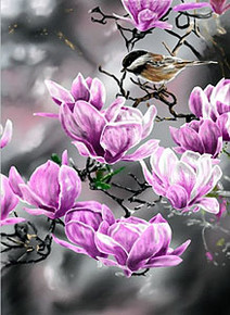 In the Pink - Bladk Capped Chickadee - Poster by Terry Isaac