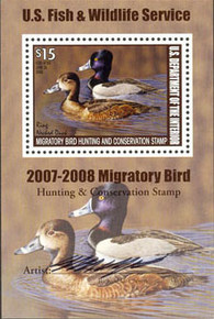 Federal Duck Stamp RW74 ( 2007 Ring-Necked Ducks)