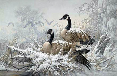 April Snow - Canada Geese by Larry Fanning