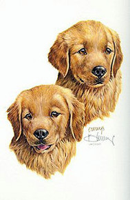 Puppies - Golden Retrievers by Roger Cruwys