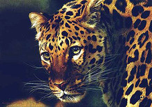 East Of The Sun - Chinese Leopard by Carl Brenders