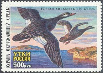 Russia Duck Stamp 1994 White - Winged Scoter