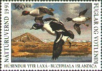 Iceland Duck Stamp 1991 Barrow's Goldeneyes