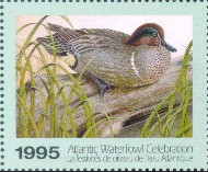 Atlantic Waterfowl Celebration Duck Stamp 1995 Green - Winged Teal Booklet
