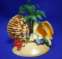 Tropical Pecten