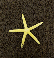 Decorative Net with Star - PDQ