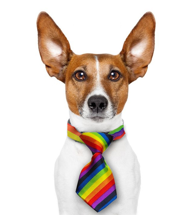 Image of Mini Rainbow Pet Tie (Dogs / Cats) LGBT Gay and Lesbian Pride Pet Accessories