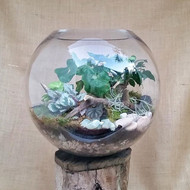 Open Glass Fishbowl Terrarium - 25cm