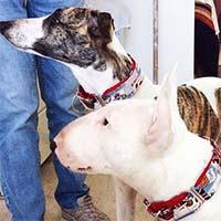Pippi & Otis