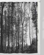 Sylvan Trees shower curtain from Creative Bath