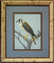 American Kestrel Original Pastel Drawing by the Porter Family Framed