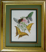 Framed Original Colored Pencil Butterflies and Flowers