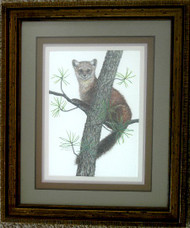 Framed Original Pastel Drawing Pine Marten