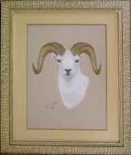 Framed Original Pastel Drawing Dall Sheep