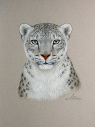 Original Pastel Drawing Snow Leopard