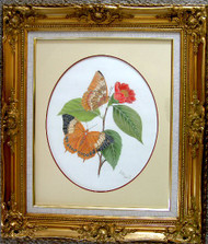 Framed Original Colored Pencil Chinese Butterflies