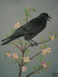 American Crow Pastel Drawing by Sally Porter
