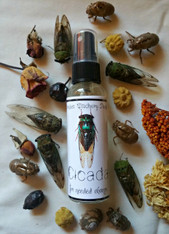Cicada, Limited Edition MIst for Manifestation