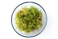 Gooseneck Moss (Rhytidiadelphus squarrosus)